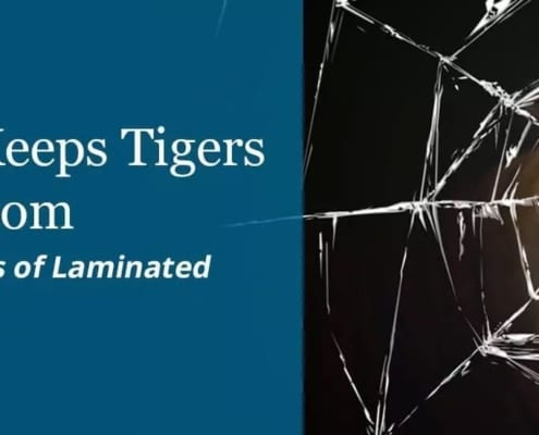 Laminated Glass Keeps Tigers Out of Your Bedroom and Other Surprising Benefits of Laminated Glass in Architecture